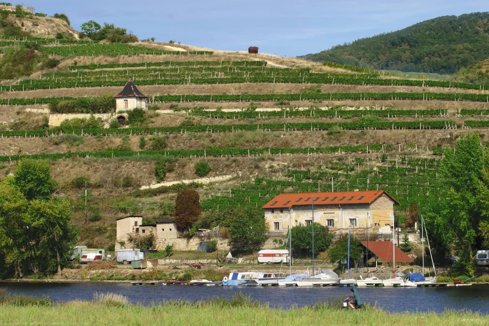 Infocentrum propaguje i litoměřická vína